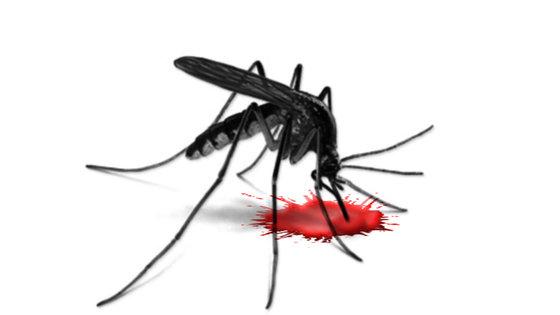 Pasożyt odpowiedzialny za malarię zwyciężony dzięki zahamowaniu enzymu PNP