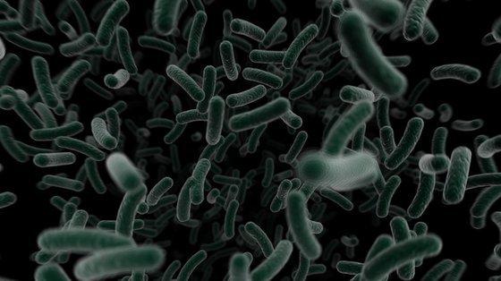 Szczep bakterii Neisseria gonorrhoeae budzi obawy