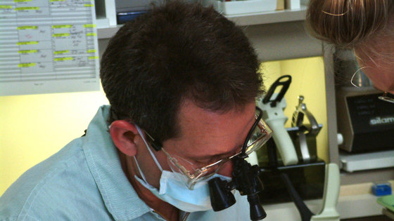 Malaria: odkrycie na nowo budzi nadzieję na skuteczną szczepionkę