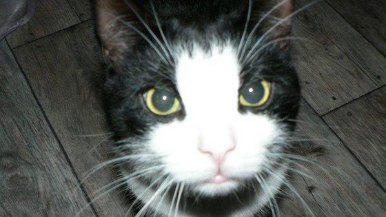 Alergia na koty: wkrótce lekarstwo?