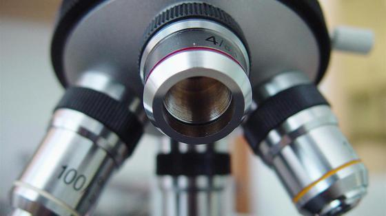 Komórki macierzyste embrionalne: zachęcające rezultaty przeciwko ślepocie
