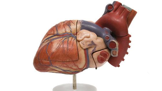 Kardiomiopatia - uszkodzenie mięśnia sercowego: rodzaje choroby
